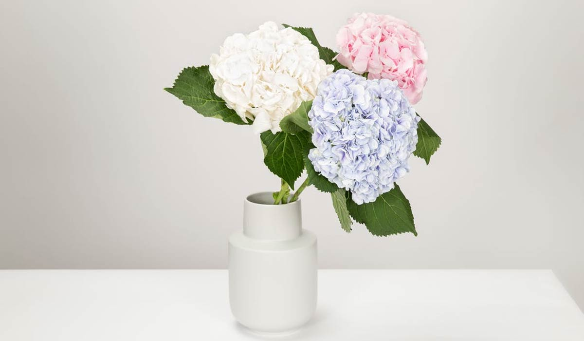 Three White, Blue, and Pink Petaled Flowers